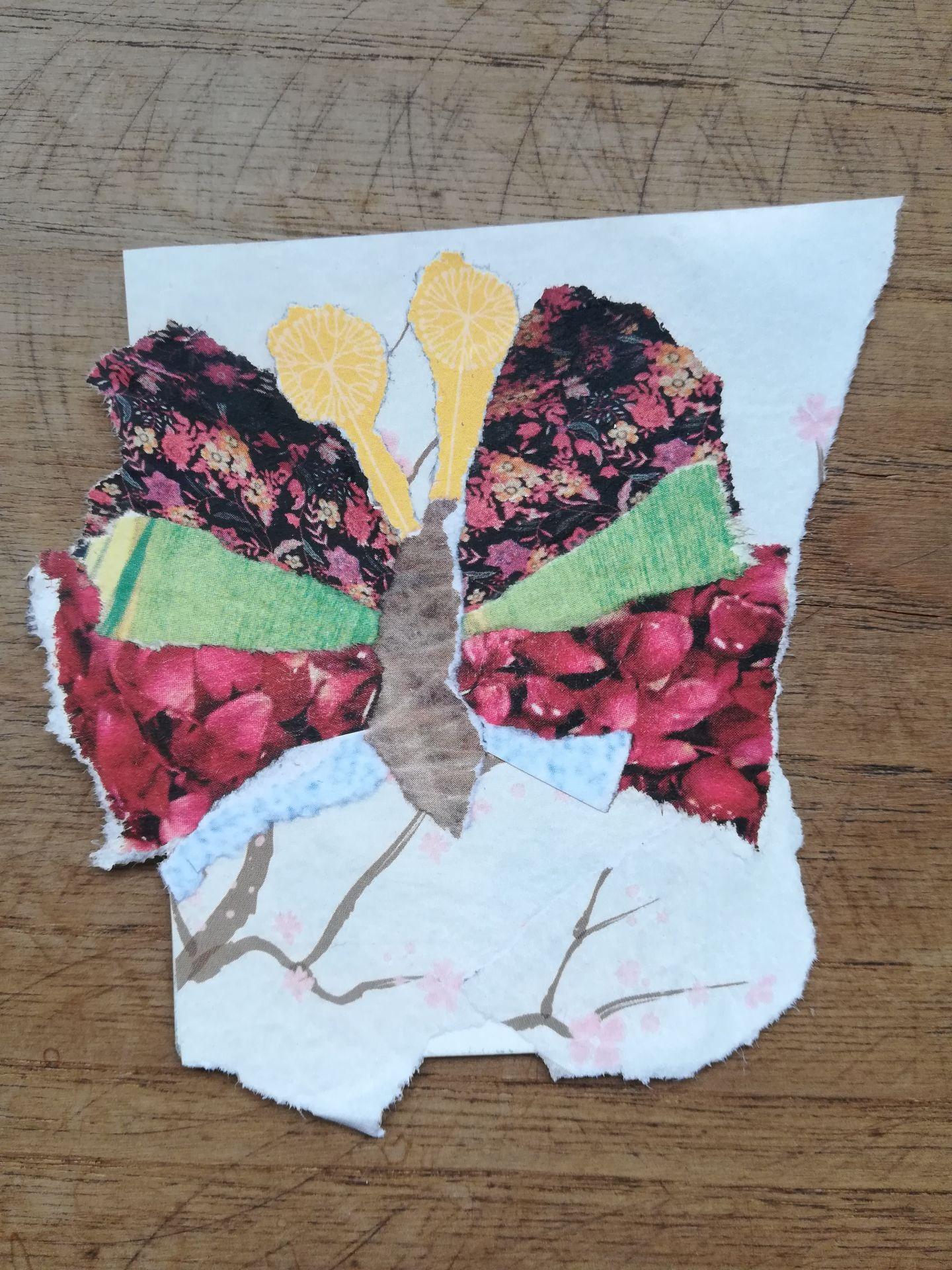 4.papillon