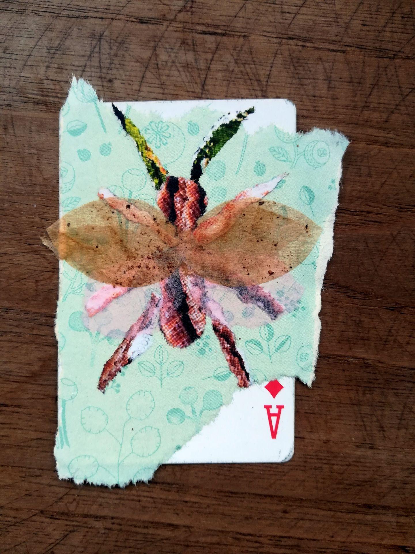25.insecte