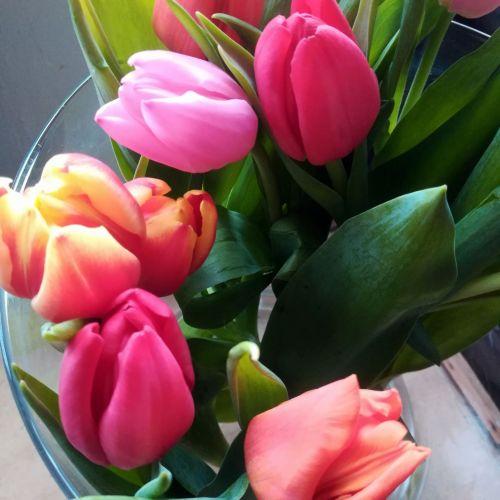Bouquet tulipe 7